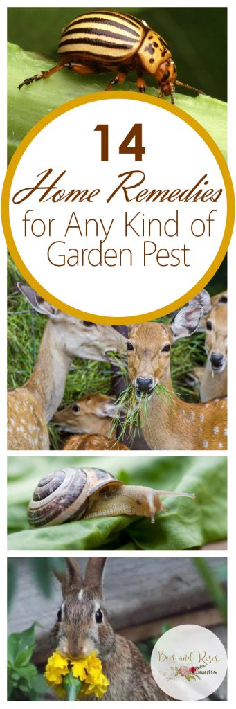 14 Home Remedies for Any Kind of Garden Pest| Garden, Gardening Hacks, Garden Pest Control, Gardening 101, Natural Pest Control, Natural Pest Control Hacks, Popular Pin