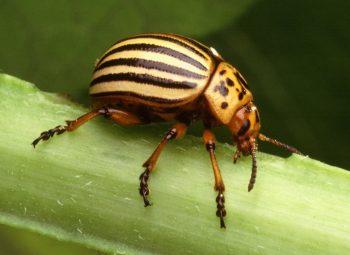 Garden Pest, Garden Pest Control, Garden Pest Repellent, Garden Pests control Natural , Gardening, Garden Ideas, Gardening Ideas