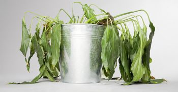 5 Reasons To Kill Your Plants| Plant Care, Plant Care Guide, Plant Care Houseplants, Plant Care Tips, Garden, Garden Ideas, GArdening, Gardening Ideas,