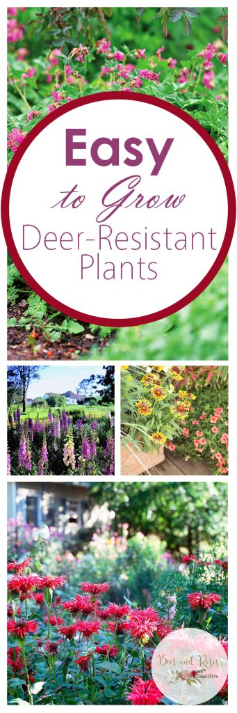 Easy to Grow Deer-Resistant Plants| Deer Resistant Plants, Gardening, Gardening, Pest Resistant Plants, Pest Control, Natural Ways to Control Plants, Gardening Hacks, Deer Resistant Plant Varieties, Popular Pin