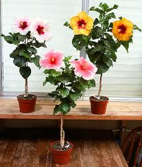 Growing Hibiscus, Hibiscus, Hibiscus Flowers, Hibiscus Flower Care, Hibiscus Flower Garden, Flower Garden, Flower Gardening, Gardening, Gardening for Beginners