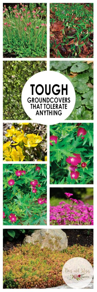 Tough Groundcovers That Tolerate ANYTHING| Ground Cover, Ground Cover Plants, Plants Perfect for Ground Cover, Tough and Tolerant Ground Cover Plants, Ground Covers That Are Rough, Plants, Gardening, Curb Appeal
