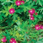 Tough Groundcovers That Tolerate ANYTHING  Ground Cover, Ground Cover Plants, Plants Perfect for Ground Cover, Tough and Tolerant Ground Cover Plants, Ground Covers That Are Rough, Plants, Gardening, Curb Appeal