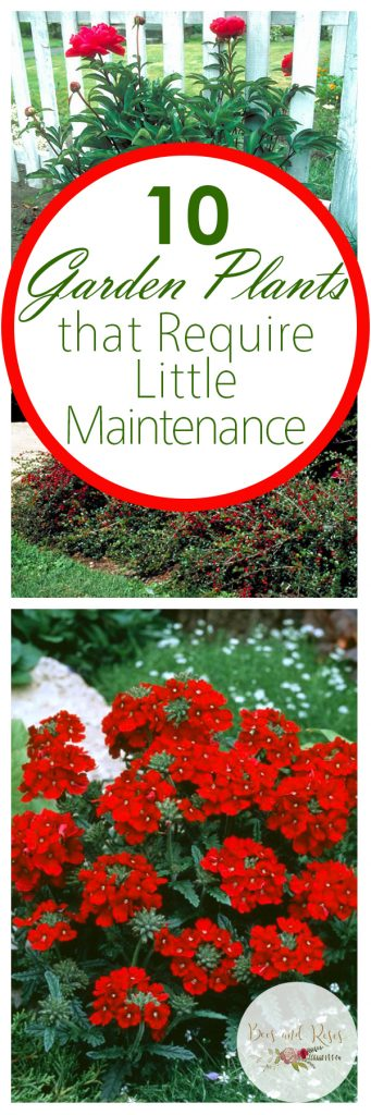 10 garden plants that require little maintenance bees