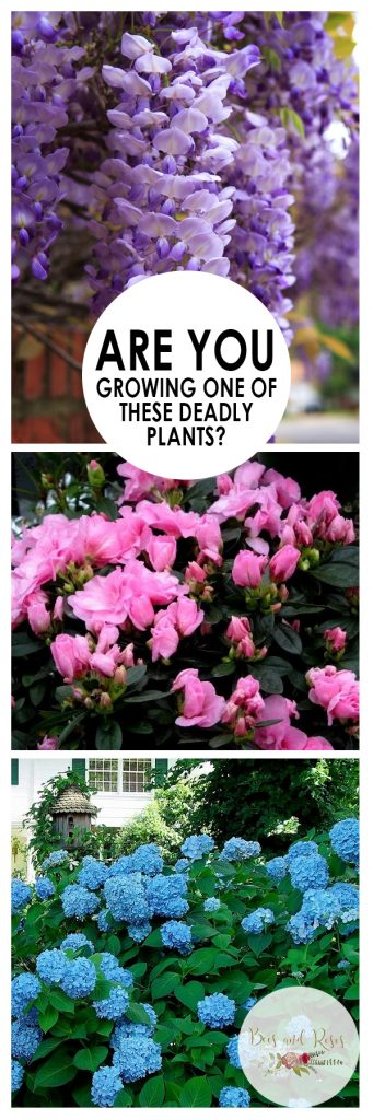 Are You Growing One of These Deadly Plants| Growing Plants, Deadly Plants, How to Grow Deadly Plants, Deadly Plants Not to Grow, Gardening, Gardening Hacks, Gardening Tips and Tricks, Popular Pin