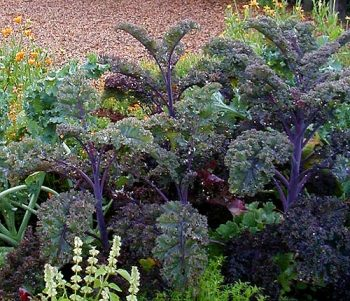 Grow These Vegetables This Fall!| Vegetable Garden, Fall Vegetable Gardening, How to Grow Vegetables, Fall Vegetable Garden, Gardening, Gardening Hacks, Gardening 101, Gardening Tips and Tricks, Vegetables to Grow In Fall, Popular Pin