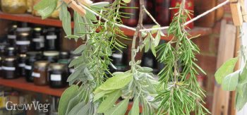 How to Dry Your Homegrown Herbs| Drying Homegrown Herbs, How to Dry Homegrown Herbs, Herbs, Growing Homegrown Herbs, Gardening, Gardening Hacks, Gardening TIps and Tricks, Popular Pin