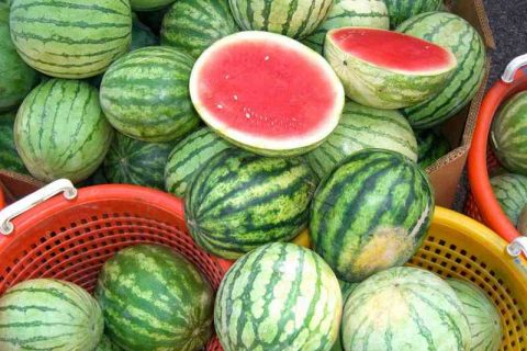 How to Pick the BEST Watermelon| Picking The Best Watermelon, How to Grow Watermelon, Watermelon Picking Tips, Popular Pin