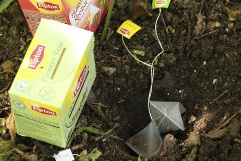 Teabags, How to Use Teabags In Your Garden, Gardening, Gardening Tips and Tricks, Uses for Teabags In Your Garden, Gardening 101, Popular Pin