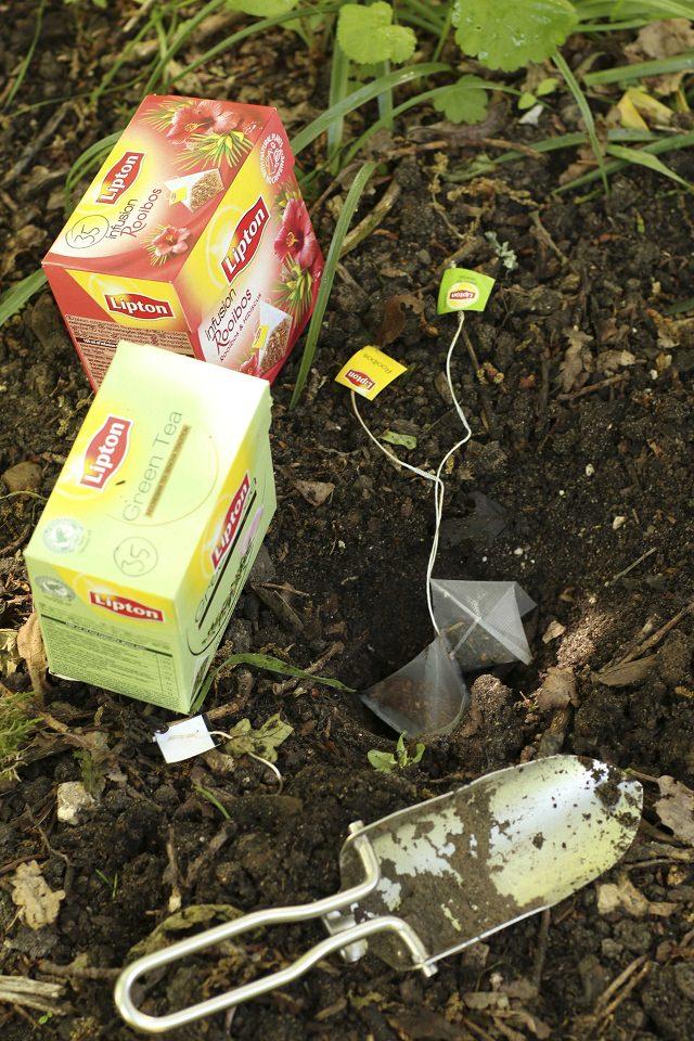 Teabags in Garden, Teabags in the garden, Teabags Gardening, Garden Ideas, Gardening Ideas, Gardening Tips, Gardens, Gardening for Beginners