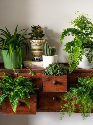 How to Correctly Pot Indoor Plants  Potted Plants Indoors, How to Pot Indoor Plants, Potting Indoor Plants, Indoor Gardening, Potting Tips and tricks, Indoor Gardening Hacks, How to Pot Indoor Plants, Popular Pin