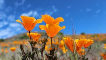 Hot Weather Plants, Hot Weather Plants Drought Tolerant, Hot Weather Plants Sun, Hot Weather Plants Garden, Gardening, Garden Ideas, Gardening Ideas, Garden