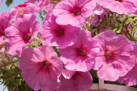 10 Colorful Flowers That Bloom During the Summer| Summer Flowers, Flowers That Bloom in the Heat, Perennials that Like Heat, Summer Gardening, Summer Flower Gardening, Summer Flower Gardening Tips and Tricks, Gardening 101, Popular Pin