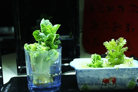 12 Herbs and Veggies that ACTUALLY Grow in Water  Herbs and Vegetables, Herbs and Vegetable Garden, Vegetable Garden, Vegetable Gardening, Gardening Ideas, Gardening Tricks, Herb Garden, Herb Gardening