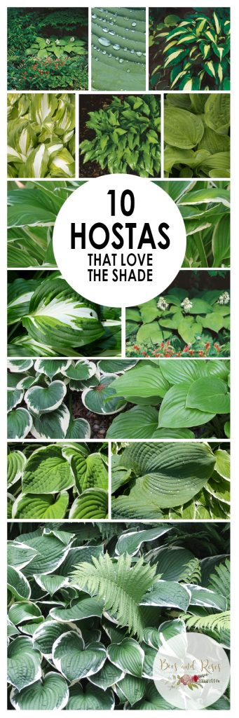 10 Hostas That LOVE The Shade| Shade Hosta Garden, Hosta Gardens, Hosta Landscaping, Hosta Garden Ideas, Hostas Care, Garden Ideas, Gardening, Gardening Ideas, GArdening TIps