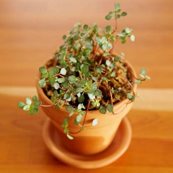 Plants for Terrariums, Plants Perfect for Terrariums, Gardening, Indoor Gardening, Indoor Gardening Tips and Tricks, Terrarium Gardening, Gardening Tips and Tricks, Gardening Hacks.
