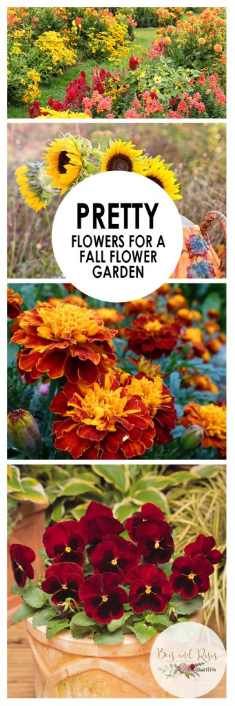 Pretty Flowers for a Fall Flower Garden| Fall Gardening, Fall Gardening Tips and Tricks, Flowers for Fall, Pretty Flowers, Flowers That Tolerate Cooler Weather, Popular Pin