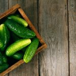 10 Tips to Growing the Best Cucumbers| How to Grow Cucumbers, Growing Cucumbers, Cucumbers, How to Grow Cucumbers, Gardening, Vegetable Gardening, Vegetable Gardening Tips and Tricks, Gardening 101, Vegetable Gardening Hacks, Popular Pinmbers, Growing Cucumbers, How to Grow Cucumbers, Gardening, Vegetable Gardening, Vegetable Gardening Tips and Tricks, Gardening 101, Vegetable Gardening Hacks, Popular Pin