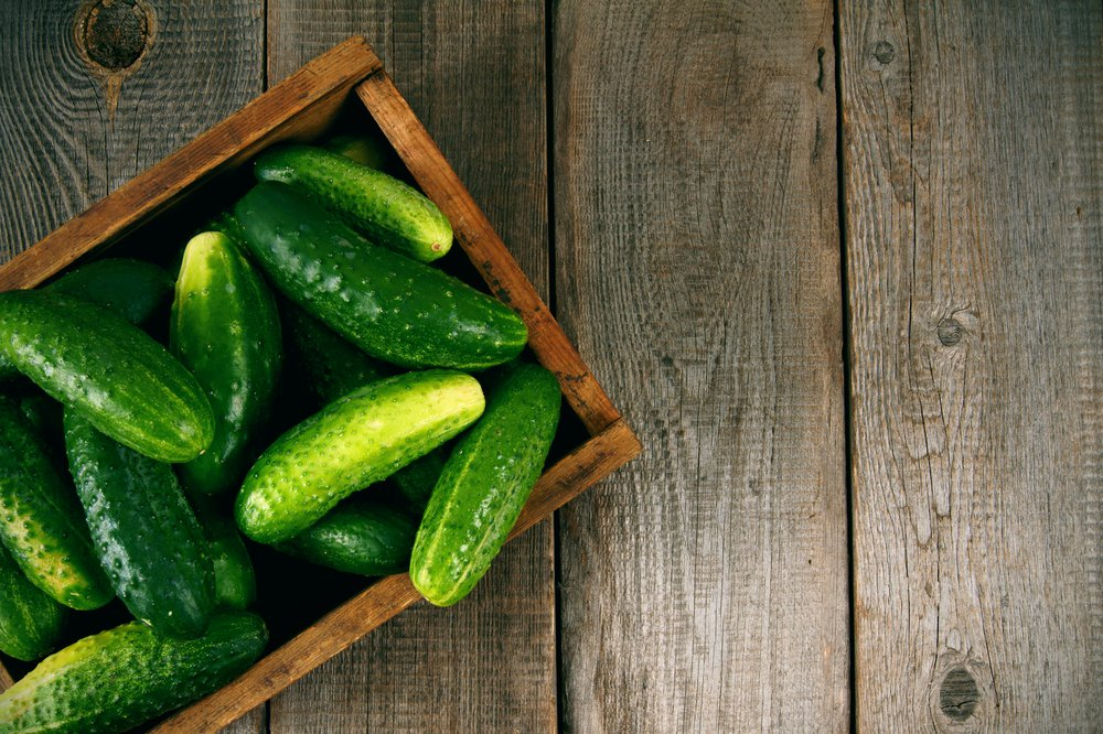 10 Tips to Growing the Best Cucumbers  How to Grow Cucumbers, Growing Cucumbers, Cucumbers, How to Grow Cucumbers, Gardening, Vegetable Gardening, Vegetable Gardening Tips and Tricks, Gardening 101, Vegetable Gardening Hacks, Popular Pinmbers, Growing Cucumbers, How to Grow Cucumbers, Gardening, Vegetable Gardening, Vegetable Gardening Tips and Tricks, Gardening 101, Vegetable Gardening Hacks, Popular Pin