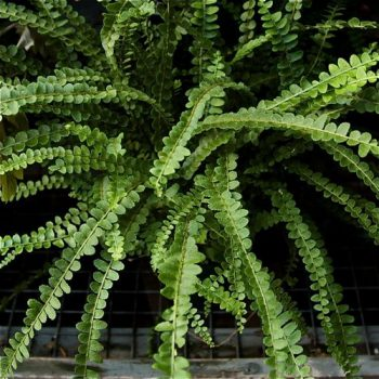 Terrarium Plants, Terrarium DIY, Terrarium Ideas, Terrarium Centerpiece, Indoor Garden, Indoor Gardening, Garden, Gardening, Gardening Ideas, Garden TIps, Garden Ideas