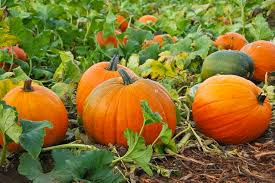 Grow These Vegetables This Fall!  Vegetable Garden, Fall Vegetable Gardening, How to Grow Vegetables, Fall Vegetable Garden, Gardening, Gardening Hacks, Gardening 101, Gardening Tips and Tricks, Vegetables to Grow In Fall, Popular Pin