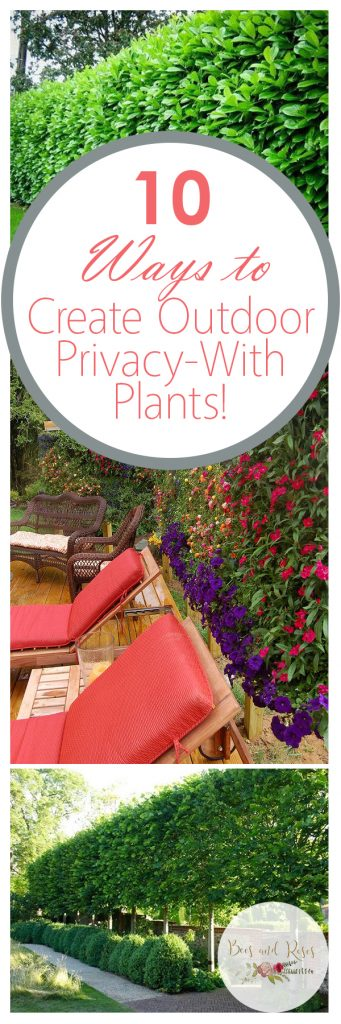 How to Create Outdoor Privacy, DIY Outdoor Privacy, Simple Ways to Create Outdoor Privacy With Plants, Outdoor DIYs, Creating Privacy With Plants, Popular Pin
