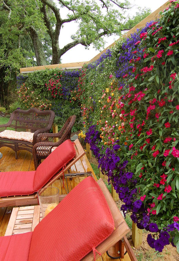 10 Ways To Create Outdoor Privacy With Plants Bees And