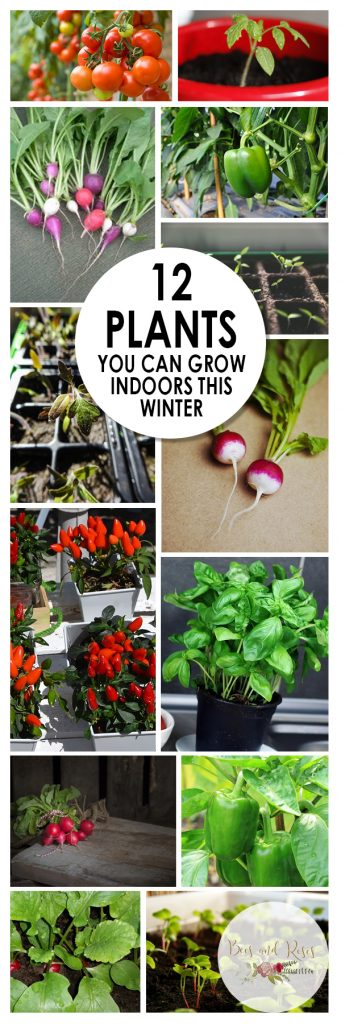 12 plants you can grow indoors this winter bees and roses - Growing vegetables indoors practical tips ...