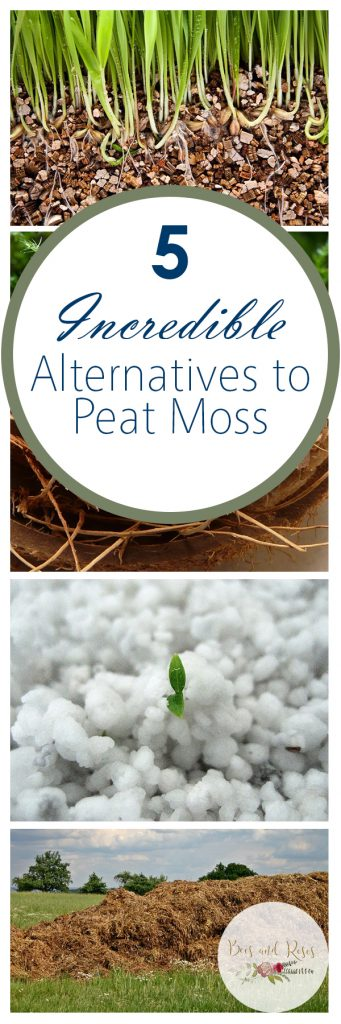 5 Incredible Alternatives to Peat Moss| Peat Moss, Peat Moss Alternatives, Alternatives to Peat Moss, Gardening, Gardening Tips and Tricks, Soil Additives, Soil Additives for a Strong Garden
