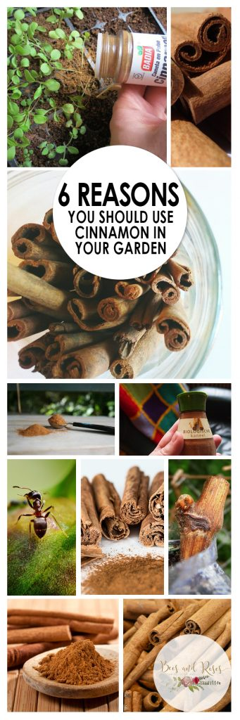 Cinnamon in the Garden, Cinnamon Garden, Cinnamon in Garden, Gardening, Gardening Ideas, Garden, Garden Ideas, Gardening Tips