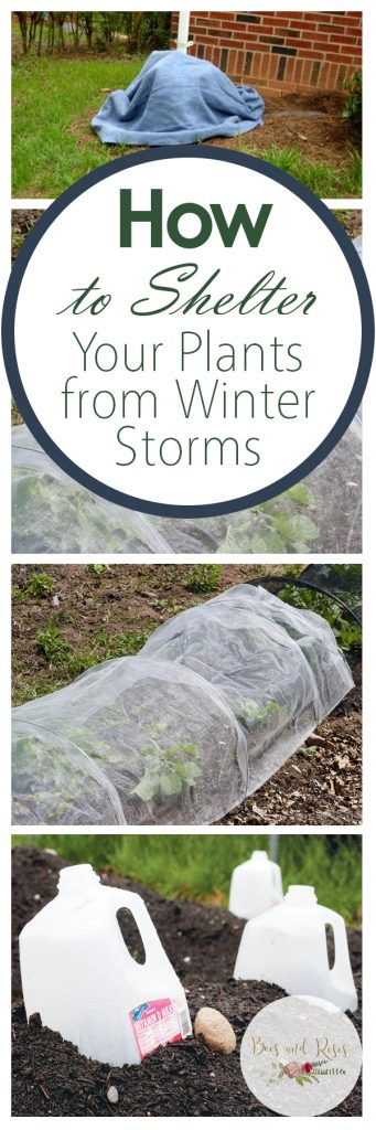 Shelter Your Plants from Storms, How to Shelter Plants from Winter Storms, Simple Ways to Shelter Sensitive Plants, How to Protect Plants from Winter Storms, Easy Ways to Protect Plants, Popular Pin