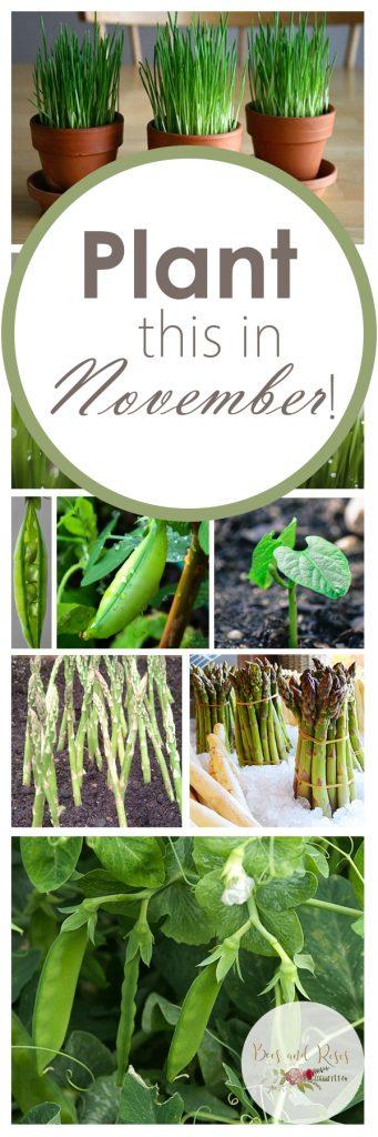 November Garden, November Gardening, November Gardening Tips, November Garden Chores, cold Hardy Vegetables, Vegetable Garden, Vegetable Gardening, Gardening, Garden Ideas, Gardening Tips