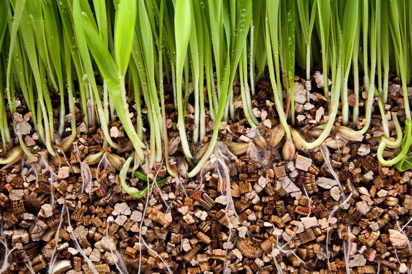 5 Incredible Alternatives to Peat Moss  Peat Moss, Peat Moss Alternatives, Alternatives to Peat Moss, Gardening, Gardening Tips and Tricks, Soil Additives, Soil Additives for a Strong Garden