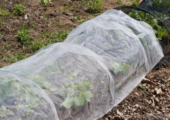 shelter for plants.