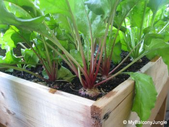 Container Gardening, Root Vegetables, Growing Carrots, Vegetable Garden, Vegetable Gardening, Container Gardening Vegetables