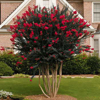 Growing Trees, Tree Growing Tips and Tricks, Trees for Small Spaces, Small Space Landscaping Tips, Landscaping Hacks for Small Yards, Trees for Little Yards, How to Grow Trees, Popular Pin