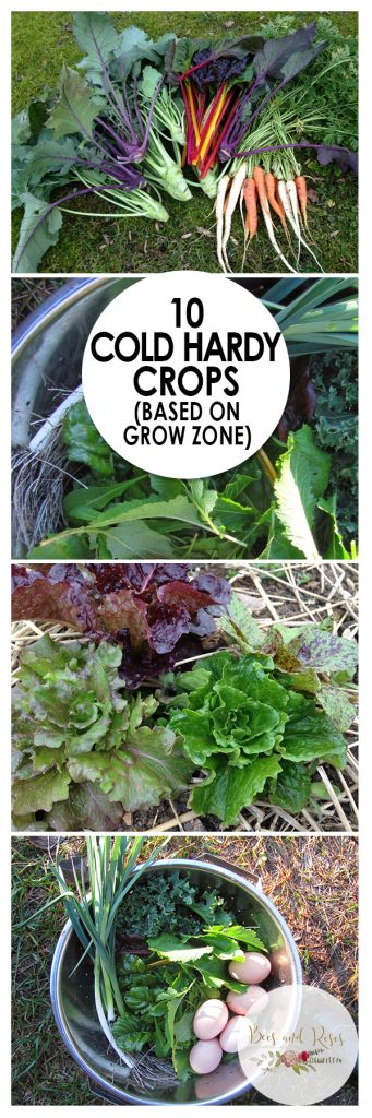 10 Cold Hardy Crops (Based on Grow Zone)| Cold Hardy Crops, Vegetable Gardening, Winter Gardening, Winter Vegetable Gardening, Gardening 101, Gardening Tips, Gardening Crafts. #WinterGardening #ColdHardyCrops #Gardening #VegetableGardening