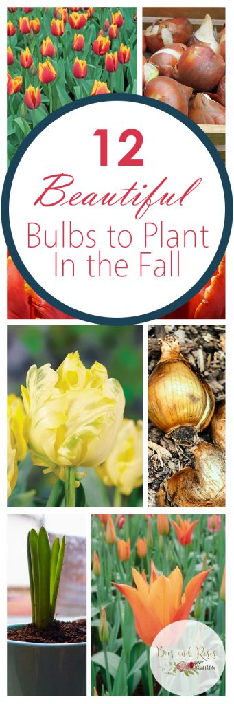 12 Beautiful Bulbs to Plant In the Fall| Fall Flowers, Fall Gardening, Fall Gardening Projects, Fall Bulbs, Gardening 101, Autumn Gardening, Fall Gardening 101. #FallGardening #Gardening #FallFlowers