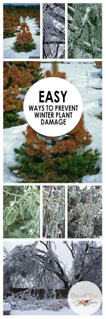 Easy Ways to Prevent Winter Plant Damage| Winter Plant Damage, Prevent Winter Plant Damage, Winter Plant Care, Plant Care, Winter Gardening, Winter Gardening Projects, Popular Pin