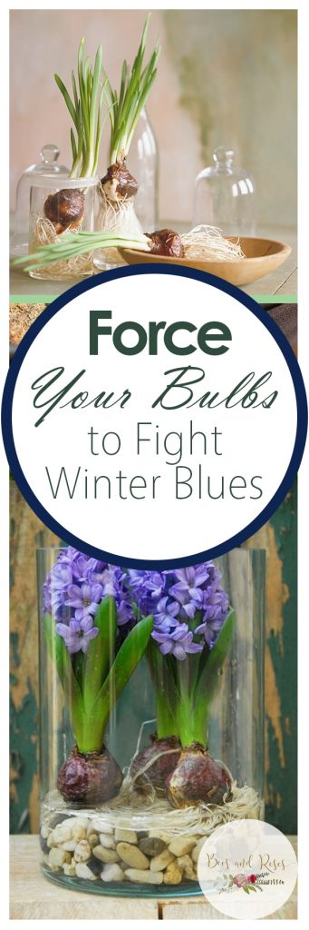 Force Bulbs, Force Bulb Indoors, Force Bulbs In Water, Force Bulbs Indoors Water, Indoor Garden, Indoor Gardening, Gardening, Garden Ideas, Gardening Tricks