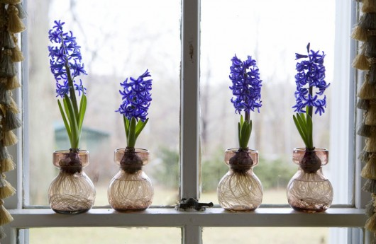 Force Your Bulbs to Fight Winter Blues| How to Fight Winter Blues, Winter Gardening Projects, How to Force Bulbs, Forcing Bulbs to Fight Winter Blues, Tulip Care, How to Grow Tulips In the Winter, Growing Tulips Indoors, Popular Pin