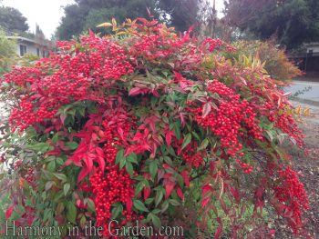 Winter Plants, Winter Plants Outdoors, Cold Hardy Plants, Winter Garden, Winter Plant Gardening, Gardening, Garden Ideas, Gardening Ideas