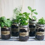How to Create a Mason Jar Herb Garden| Mason Jar Herb Garden, Herb Garden Projects, Mason Jar, Mason Jar 101, Herb Garden, Make Your Own Herb Garden, Indoor Gardening, Tips and Tricks, Popular Pin