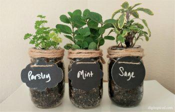 Mason Jar Herb Garden, Herb Garden, Indoor Garden, Indoor Gardening, Gardening Ideas, Garden, Garden Ideas