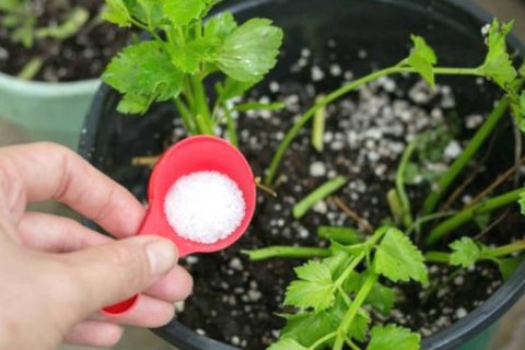 All Natural Weed Killers| Natural Weed Killers, All Natural Weed Killers, Natural Ways to Kill Weeds, Kill Weeds Naturally, Gardening, Natural Gardening, Natural Gardening Tips and Tricks, Natural Living