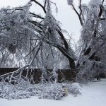 Easy Ways to Prevent Winter Plant Damage  Winter Plant Damage, Prevent Winter Plant Damage, Winter Plant Care, Plant Care, Winter Gardening, Winter Gardening Projects, Popular Pin