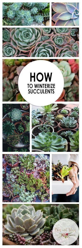 Winterize Succulents, Succulent Care, Winter Succulent Care, Winter Plant Care, Winter Plant Care Tips, Succulent Garden