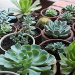 Winterize Succulents, Succulent Care, Winter Succulent Care, Winter Plant Care, Winter Plant Care Tips, Succulent Garden