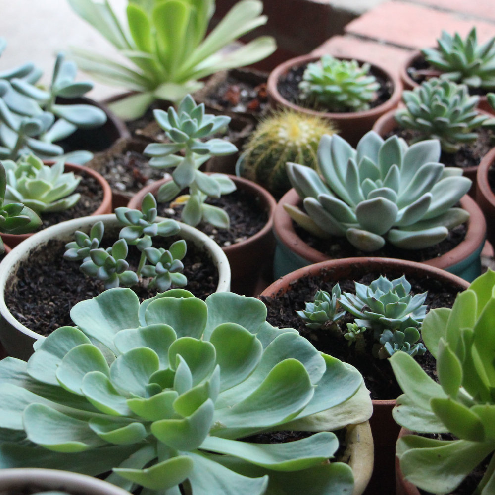 How To Winterize Succulents