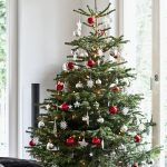 How to Care for Your Christmas Tree - Bees and Roses| Christmas Tree, Christmas Tree Care, Gardening, Plant Care Hacks, Christmas Tree DIY, Live Christmas Tree #Christmas #ChristmasTreeCare